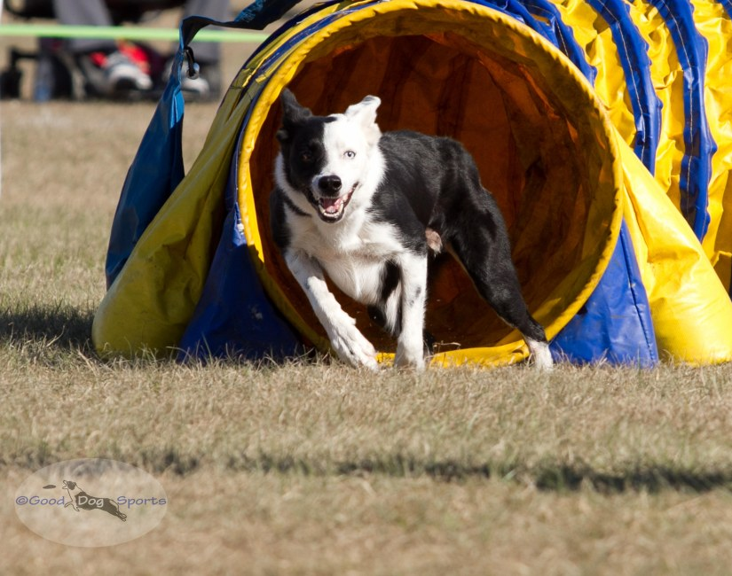 Good Dog Sports-3435